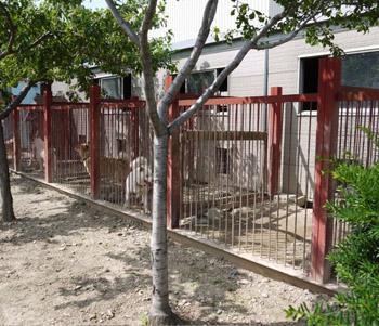 木陰がつくられて環境の良い犬舎