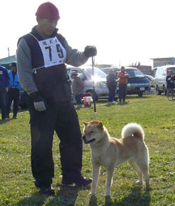 十天女・北海道佐野 平成20年冬季本部展未成犬牝組で優勝時の画像