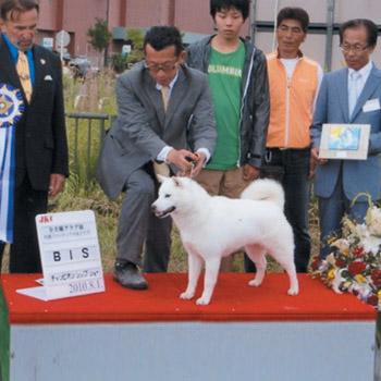 未来・小樽光洋荘がJKC札幌フロンティア犬友クラブ展で「Best in Show」獲得時