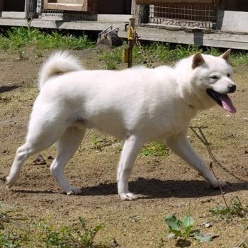 父犬の二代白湧・穂和荘