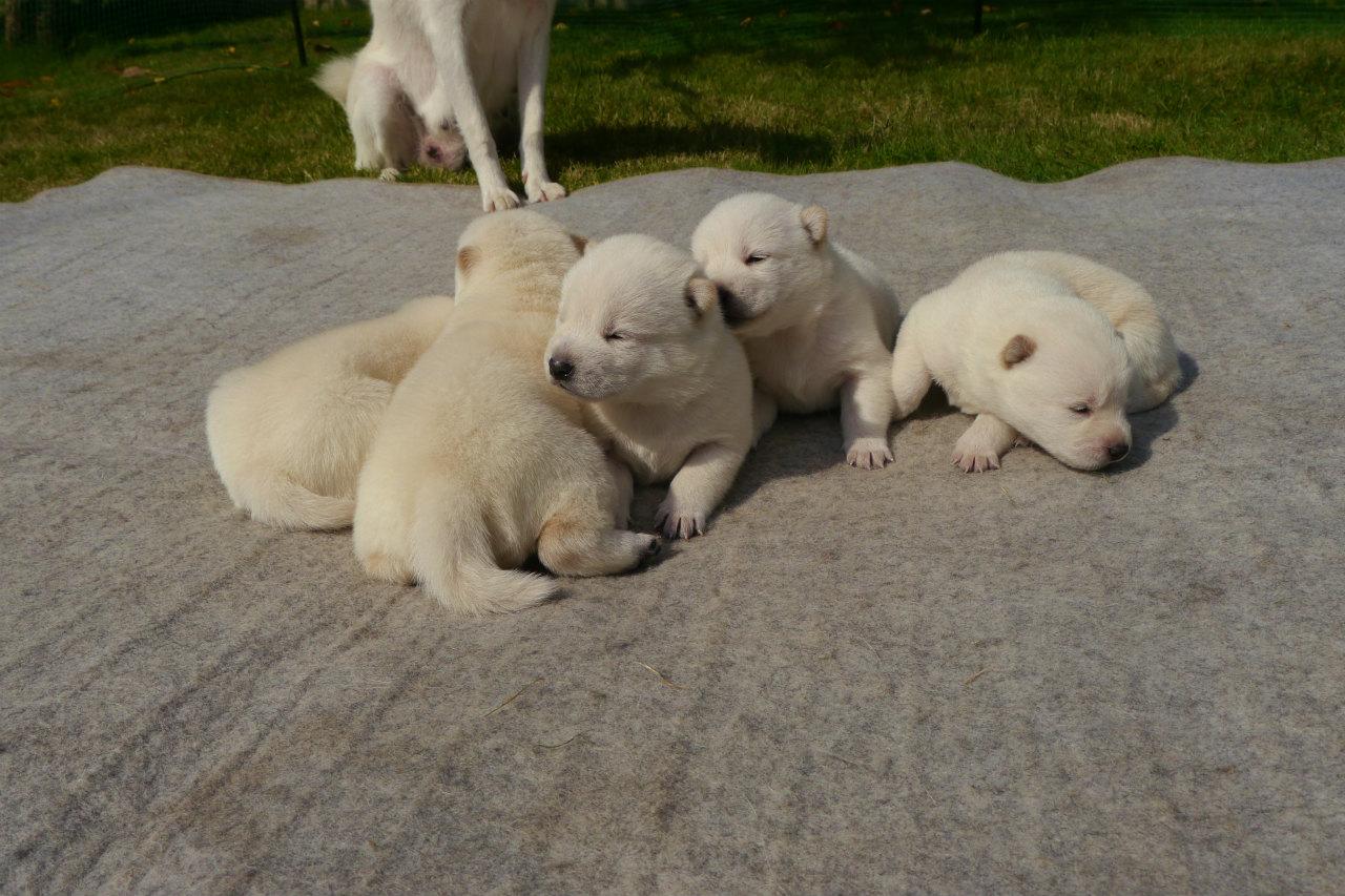 五頭兄妹が日光浴しています。(9月30日撮影 生後15日目)