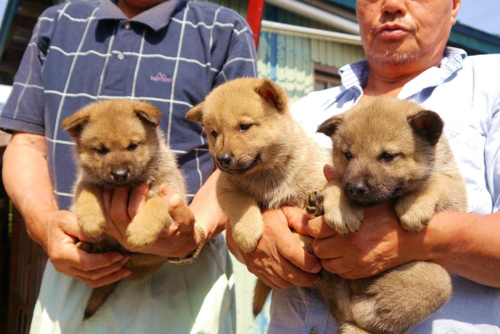 赤毛オス三兄弟。向かって右から一頭目、二頭目、三頭目です。一頭目は灰毛になる可能性あります。(8月9日撮影 生後36日目)