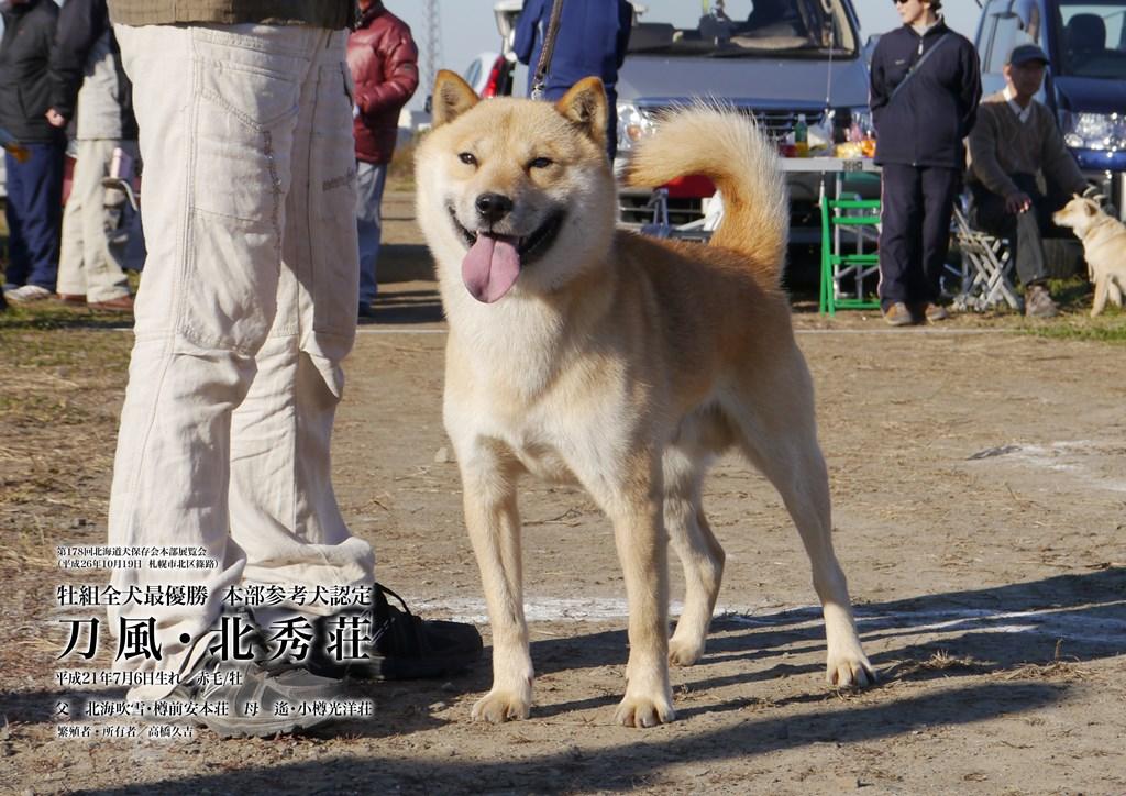 子犬の父の刀風・北秀荘は平成26年の秋季本部展覧会で北海道犬日本一を獲得した名犬です。