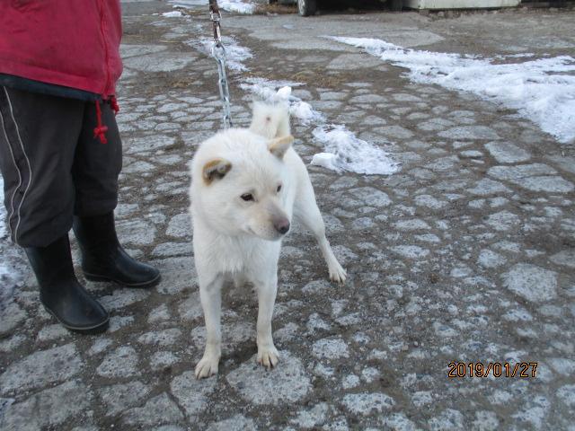 母犬 白襲雷の兄、姉は本州でイノシシ猟犬として活躍中の犬や獣猟競技で日本一を獲得した名犬などがいます。